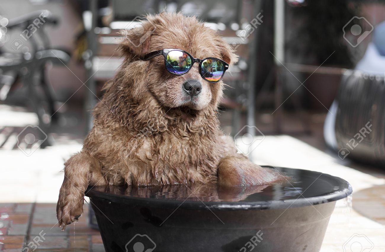 Funny dog with sunglasses enjoying an outdoor bath on basin with water.